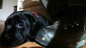 A puppy's love